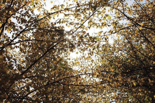 Testbild der Canon EOS 650D