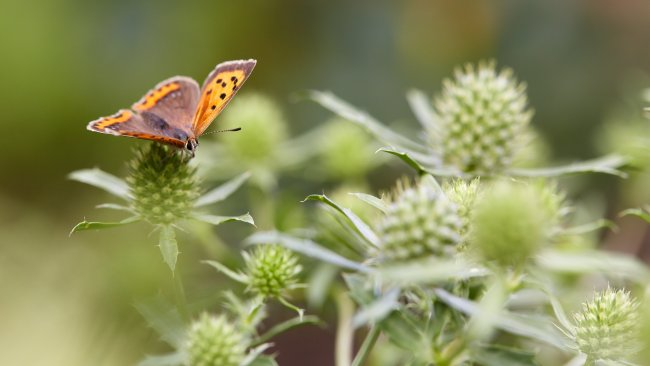 Canon EF 100 mm f/2.8L IS USM Macro | EOS 5D Mark III, f/5, 1/320 s, ISO-250