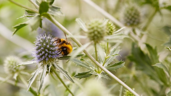 Canon EF 100 mm f/2.8L IS USM Macro | EOS 5D Mark III, f/5, 1/100 s, ISO-250