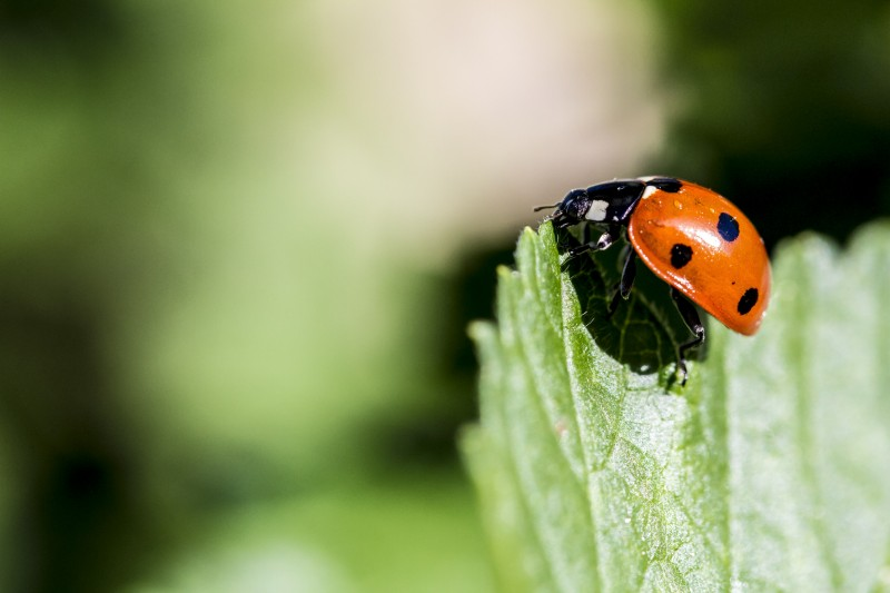 Fotowettbewerb - Bild mit dem Namen: ladybug on its way up high